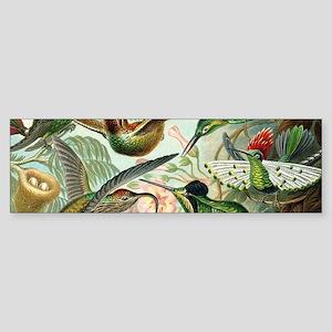 Vintage Hummingbirds Decorative Bumper Sticker