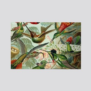 Vintage Hummingbirds Decorative Magnets