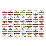 14 Trout and Salmon Pattern cp Postcards (Package