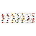 14 Trout and Salmon Pattern cp Bumper Sticker