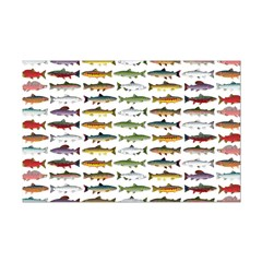14 Trout and Salmon Pattern cp Posters