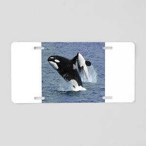 Killer Whales Aluminum License Plate
