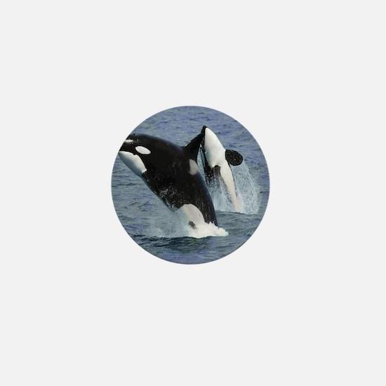 Killer Whales Mini Button