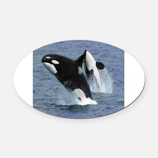 Killer Whales Oval Car Magnet