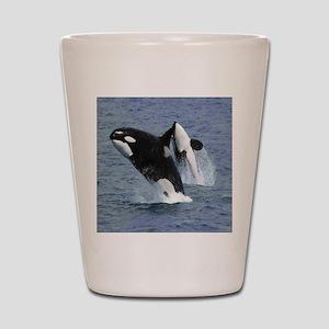 Killer Whales Shot Glass