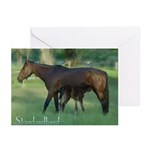 Standardbred Mare Foal Blank Cards (Pk of 10)