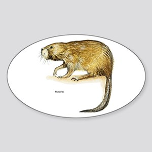 Muskrat Rodent Oval Sticker