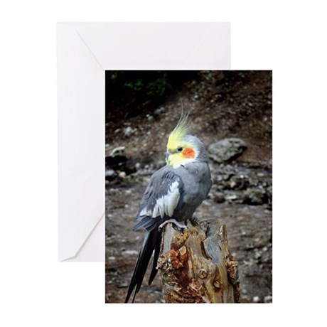 Cockatiel Greeting Cards (Pk of 10)