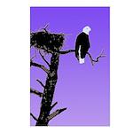 Sunset Bald Eagle Postcards (Package of 8)