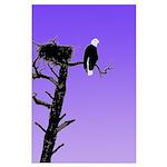 Sunset Bald Eagle Large Poster