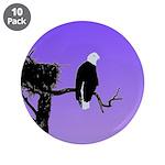 Sunset Bald Eagle 3.5