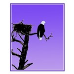 Sunset Bald Eagle Small Poster