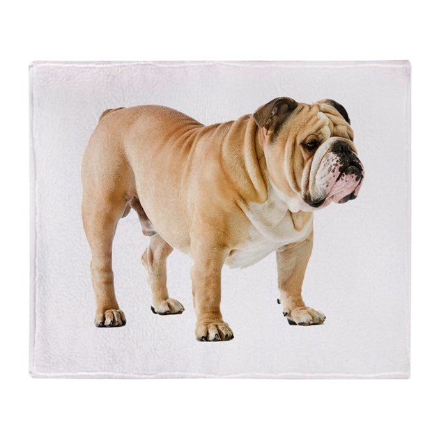 english bulldog blanket english bulldog throw blanket by admin cp120068912 8191