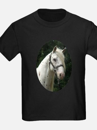 Spanish Jennet Stallion T