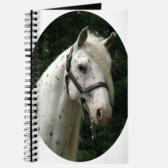 Spanish Jennet Stallion Journal
