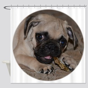 Pug Puppy With Treat Shower Curtain