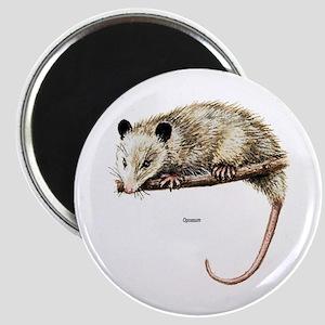 Opossum Possum Magnet