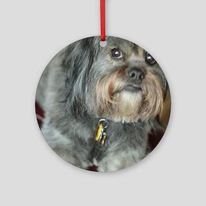 Kona Lhasa type dog up close lookin Round Ornament
