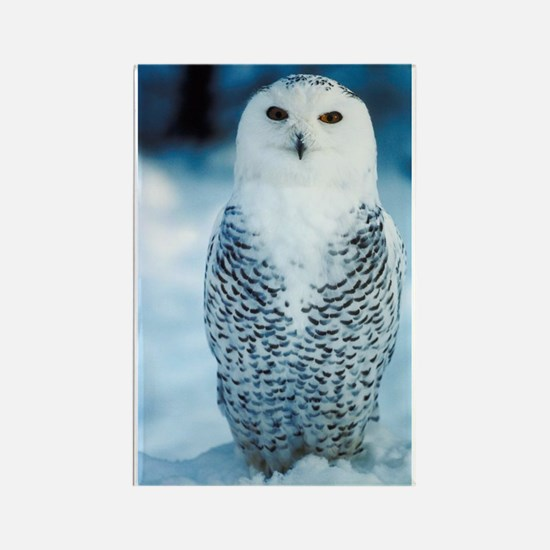 Magnificent Snowy Owl Rectangle Magnet