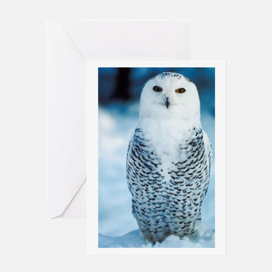 Magnificent Snowy Owl Greeting Card