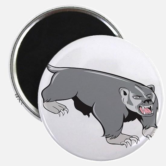 Badger Pouncing Cartoon Magnets
