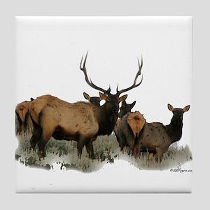 Trophy bull elk 2 Tile Coaster