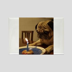 Happy Birthday Pug Magnets