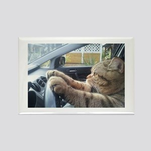 Driving Cat Magnets