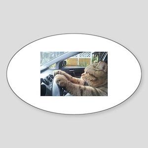 Driving Cat Sticker