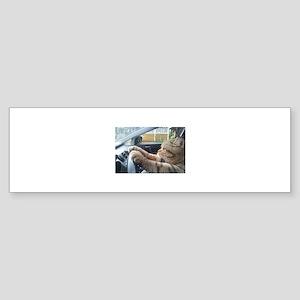 Driving Cat Bumper Sticker
