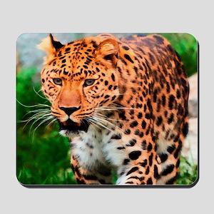 Leopard Big Cat Mousepad