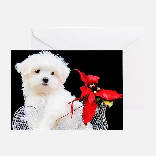 Cute Maltese dog Greeting Card