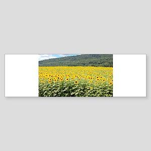 Sea of Sunflowers Bumper Sticker
