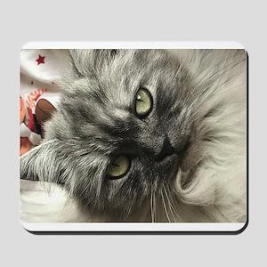 Silver Persian Birman Mousepad