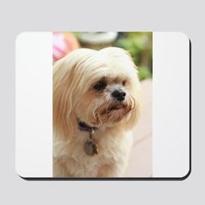 Koko lhasa close up Mousepad