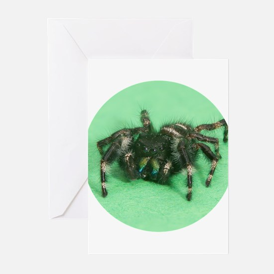Tiny Jumping Spider Greeting Cards