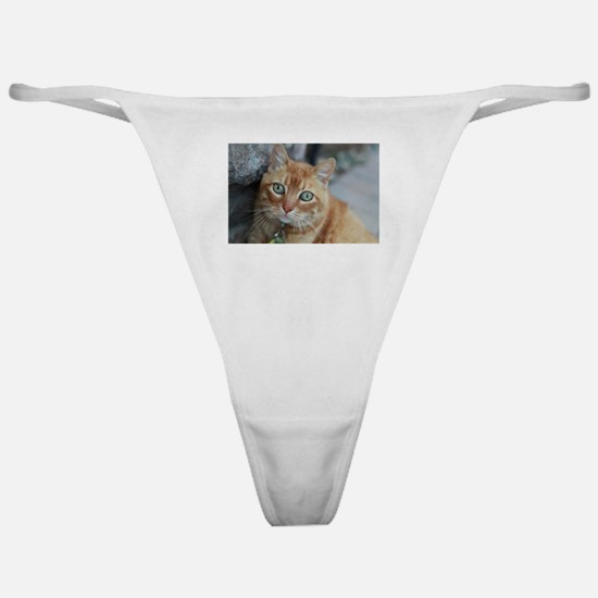 wide eyed Simba tabby cat Classic Thong