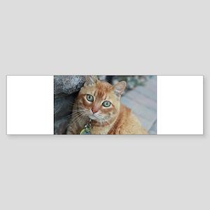 tabby cat Simba Bumper Sticker