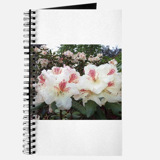 Hello Rhododendron Journal