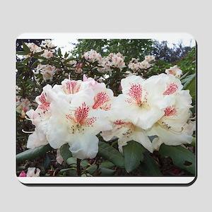 Hello Rhododendron Mousepad