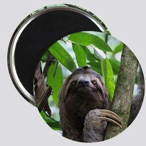 Sloth_20171101_by_JAMFoto Magnets