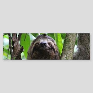Sloth_20171101_by_JAMFoto Bumper Sticker