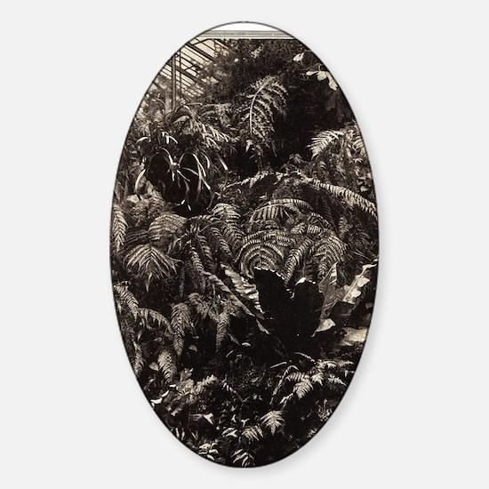 Graceful Ferns Sticker (Oval)
