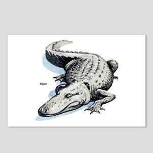 Alligator Gator Postcards (Package of 8)