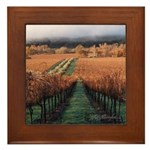 Olivina Ranch in the Livermore Wine Country