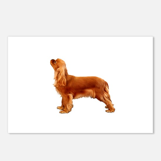 Ruby Cavalier King Charle Postcards (Package of 8)