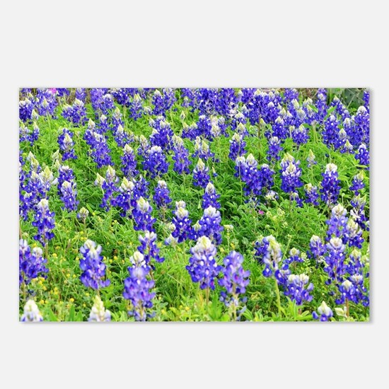 Funny Texas Postcards (Package of 8)