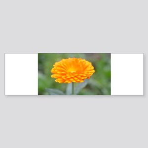 Golden Flower Bumper Sticker
