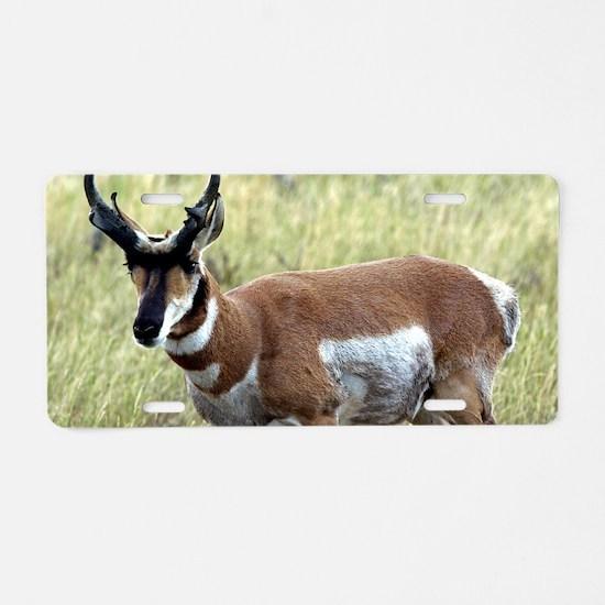 Antelope Aluminum License Plate