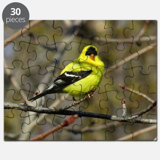 gold finch Puzzle